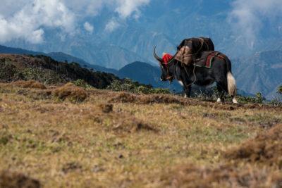 bhutan_147