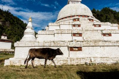 bhutan_179