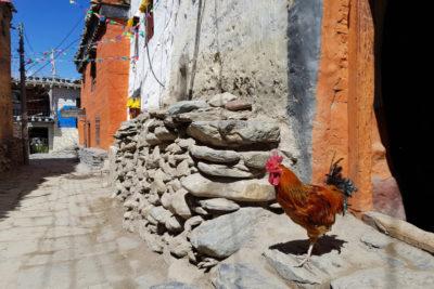 nepal_078