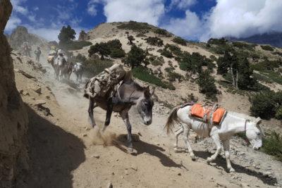 nepal_142