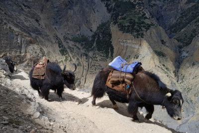 nepal_150