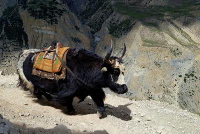 nepal_151