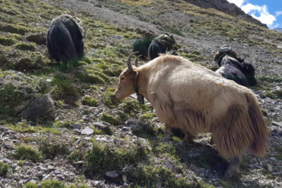nepal_152