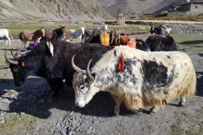 nepal_323