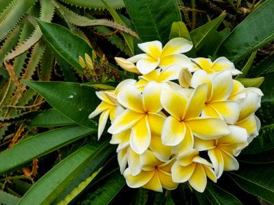hawaii_maui_cks_088