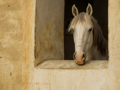 qatar_cks_009