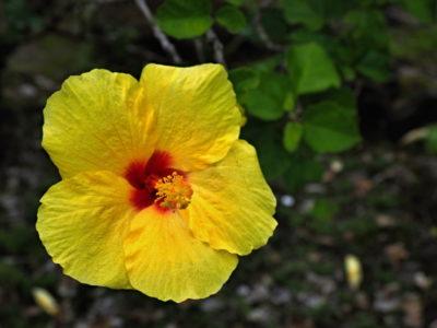 hawaii_big_island_205
