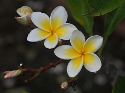 kauai_113